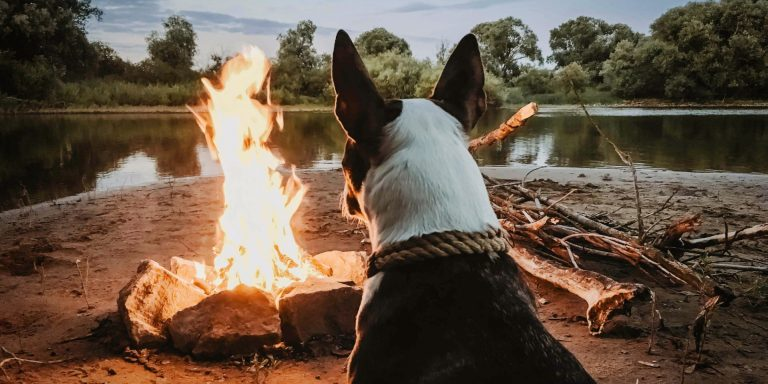 5 best tents for camping with dogs in 2021: + FAQ's