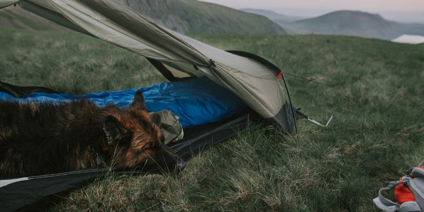best camo tent